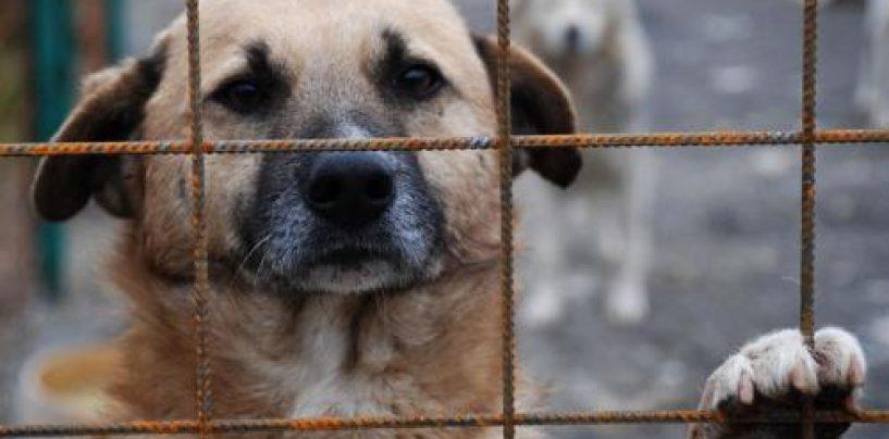 Politia locala ii va insoti pe hingheri pentru ridicarea cainilor vagabonzi din Bucuresti