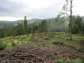 Jaful din padurile romanesti. Cum exploateaza masa lemnoasa cea mai mare companie forestiera din tara noastra