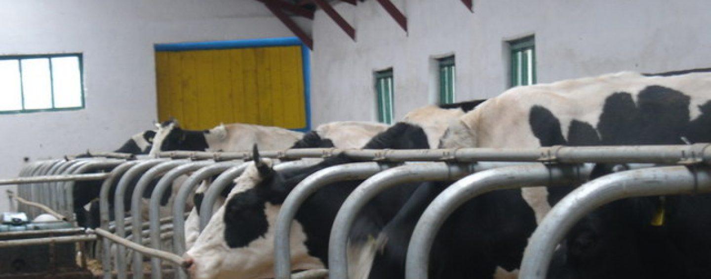 Exporturile de animale vii ale României au scăzut cu 11,4% în 2018