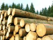Romsilva a decis. Prețurile de referință pentru 2016 ale masei lemnoase, în funcție de condițiile de piață