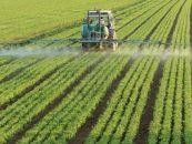 Previziuni: 2016, cel mai bun an agricol din ultimul deceniu. Cauze: ploile bogate si cresterea investitiilor