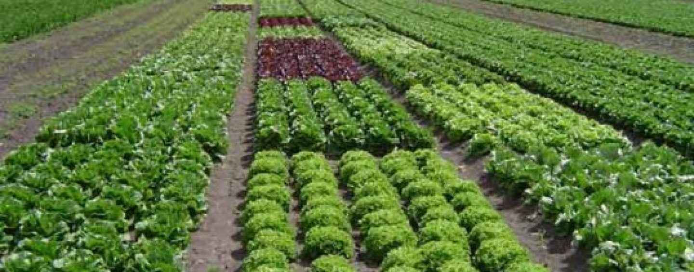 CATI BANI FACE ROMANIA DIN AGRICULTURA BIO
