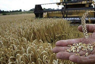 Ministrul Agriculturii: Fermierii vor primi despăgubirile pentru secetă începând din 18 septembrie