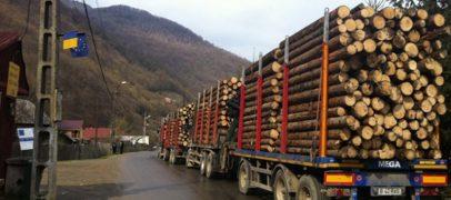 Firma austriacă Scweighofer, implicată în comerțul ilegal de lemne și defrișări. Cine îi protejează