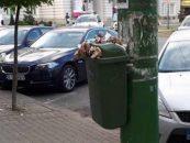 Falcă apelează la firma de casă a PNL Timișoara pentru salubrizarea gratuită a Aradului