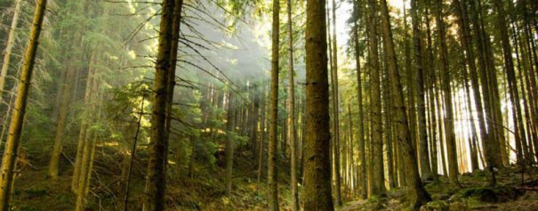 """Un caz fericit de recuperare a """"aurului verde"""" al țării.  Cum au ajuns 10 000 de ha de pădure în proprietatea urmașilor unui criminal de război"""