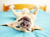 Secretele specialistilor in ingrijirea animalelor de companie pe timpul verii