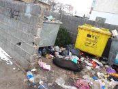Din faptele Alianței Vestului: La Arad, animalele moarte putrezesc în plină stradă pentru că nu sunt colectate corespunzător