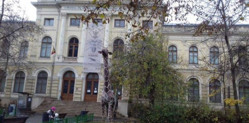 De dragul Institutului Wiesel. Cum vrea Guvernul să dezmembreze Muzeul Antipa