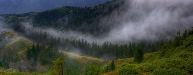 Cum s-au înstrăinat mii de ha de pădure către fostul premier suedez, pe filiera Schweighofer