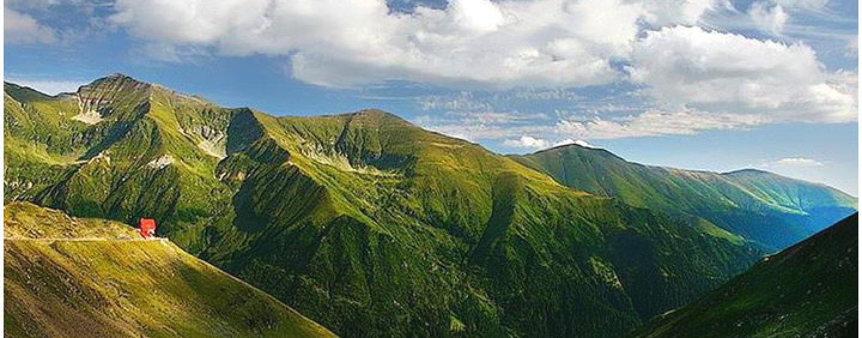 Jocul murdar al miliardarilor lumii! Cum sunt înstrăinate pădurile României, sub acoperirea unei fundații ecologice