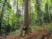 România, parcă o țară blestemată. Cum dispar pădurile țării, în fiecare zi