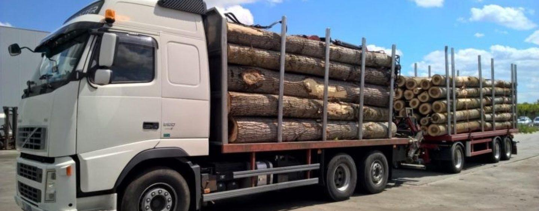 Noi stăm în case, iar hoții ne fură pădurile. Camioane de lemne, oprite de localnici