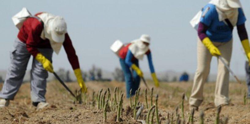 În timp ce fermierii noștri dau faliment! Cum salvează România agricultura Germaniei